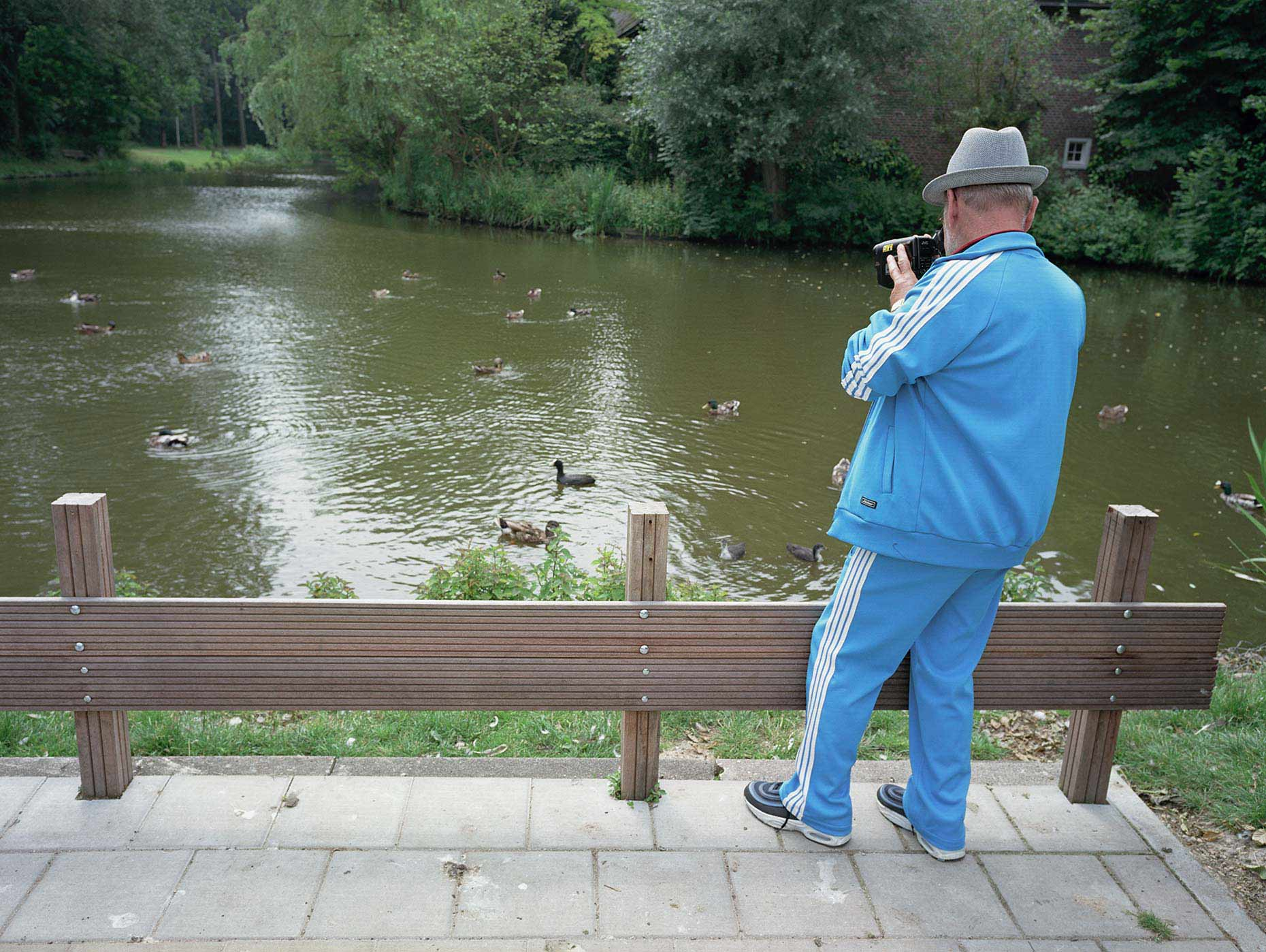 Man filming ducks in pond, man filmt eendjes in vijver