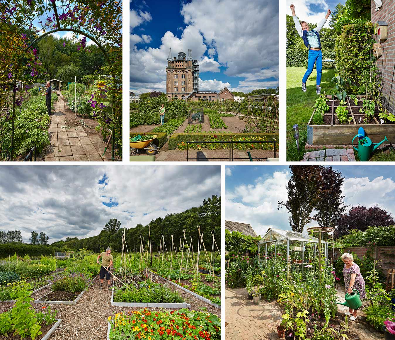 Elsevier magazine vegetable gardens